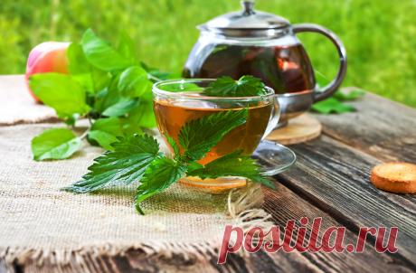 Чай из крапивы: полезные свойства, заваривание, отзывы