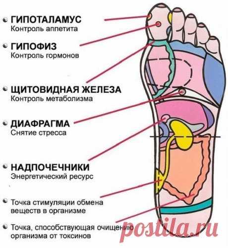 7 АКТИВНЫХ ТОЧЕК НА СТОПЕ ВЕРНУТ ВАС К ЖИЗНИ ЗА ПАРУ МИНУТ!  1. Массируя большой палец ноги, вы воздействуете на гипоталамус. Это очень полезно людям, которые страдают избыточным весом, — нажатия на эту точку помогают контролировать аппетит, способствуют естественному похудению.  2. В центре большого пальца находится точка, отвечающая за работу гипофиза — главной гормональной железы. Никакой гормональный дисбаланс вам не будет страшен, если уделять этой точке достаточно вн...