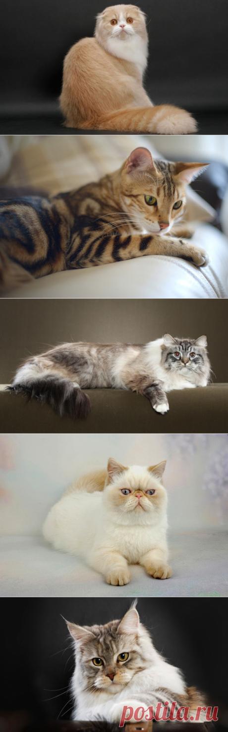 5 пород кошек для семьи с детьми | PetTips