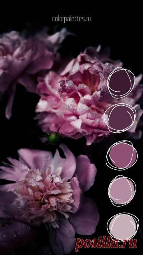 Монохромная палитра пурпурных оттенков цветов. #природнаяпалитра #цветоваяпалитра #сочетаниецветов #монохром #кодцвета #colorcode #colorpalette #purple