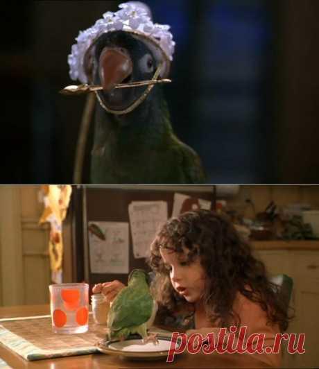 Чудо - птичка!