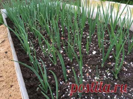 Полезные свойства яичной скорлупы как удобрения.