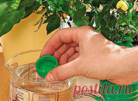 Правила удобрения комнатных растений  Обязательным условием нормальной жизни комнатных цветов является регулярное удобрение растений по определенным правилам. Основные требования к этой процедуре заключаются в следующем:  1. Не допускайте чрезмерного перекорма цветов. Избыточное содержание удобрений в почве вредит растениям.  2. Нельзя подкармливать больные или недавно укоренившиеся цветы – удобряют лишь те растения, которые находятся в стадии роста.  3. Если цветы не получают достаточно