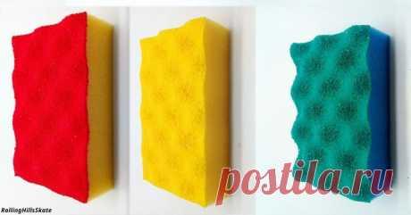 Почему губки бывают разных цветов и чем они отличаются друг от друга