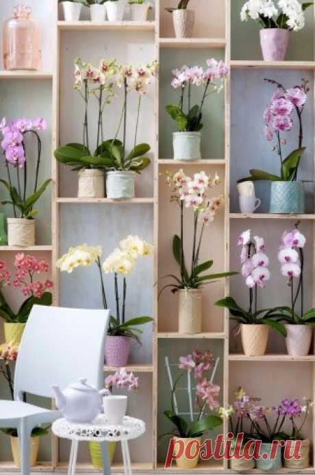 Las flores de habitación y las plantas de jardín en el nuevo domicilio - Sadovodka