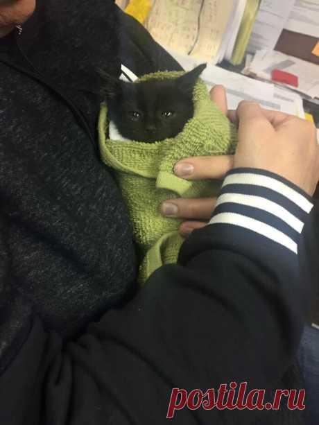 Коты - наше всё: милейшие фото кошек, которые подарят вам лучик добра