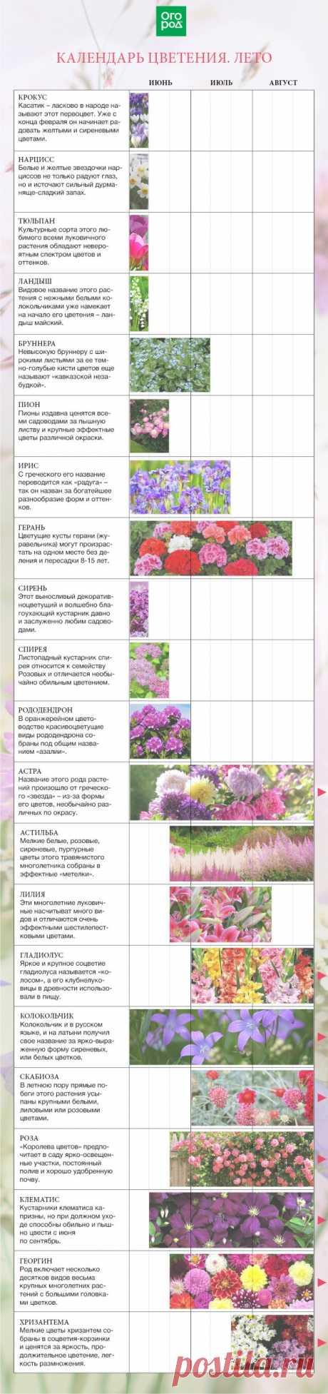 Календарь цветения многолетников по месяцам с весны до осени | Календарь работ (Огород.ru)