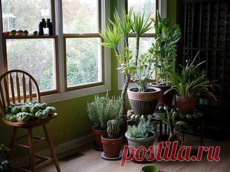 """Чем подкармливать комнатные растения? Чем подкармливать комнатные растения?  Секрет роскошного комнатного цветника прост: растения нужно хорошо подкармливать, иначе не дождаться ни пышной листвы, ни хорошего цветения. Жесткая """"диета"""", когда растение длительное время испытывает нехватку питательных веществ, обычно приводит к заболеванию – ведь сил для сопротивления у растения нет. Но как правильно составить меню для зеленых питомцев, учитывая их разные вкусы?  1). Практичес..."""
