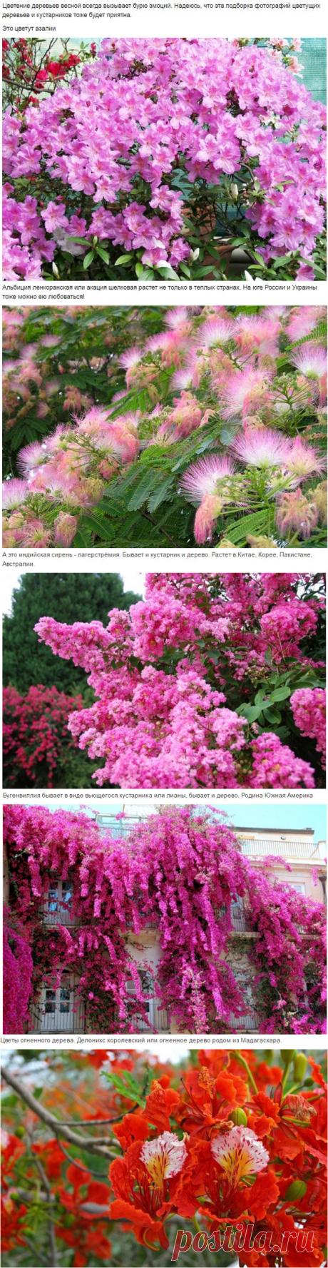 Цветущие деревья - Сундучок интересов - Группы Мой Мир