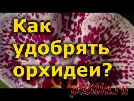 Секреты выращивания орхидей - как удобрять?