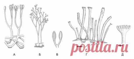 Современные высшие растения возникли в результате сдвига экспрессии генов • Сергей Ястребов • Новости науки на «Элементах» • Ботаника, Эволюция, Генетика