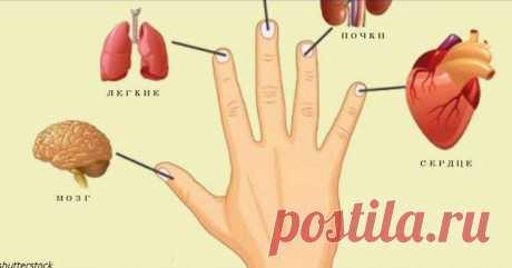 Каждый палец связан с 2 органами: Японский метод самоисцеления за 5 минут | Волковыск.BY