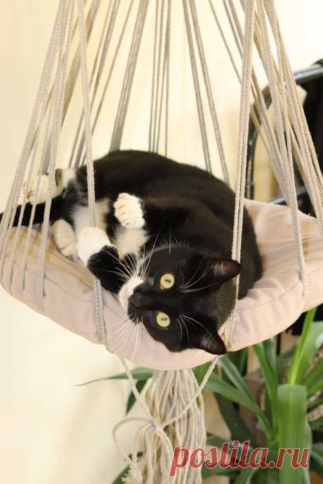Macrame cat bed Hammock for cat Cat hammock Pendant cat   Etsy