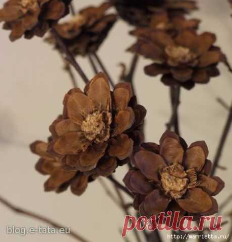 Цветы из шишек, семечек, листьев кукурузы, фисташек и макарон