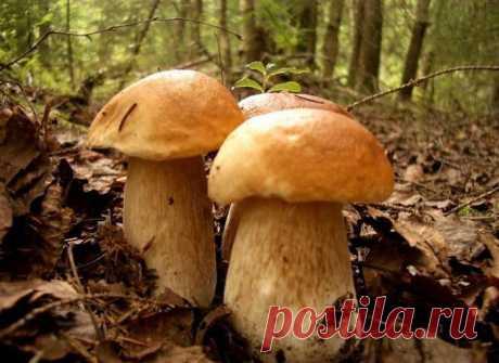 Тройная удача в лесу их встретить!!!