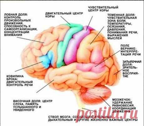 Тренируем мозг с помощью физических упражнений ! — Мегаздоров