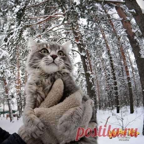 Кота впервые вынесли на улицу.