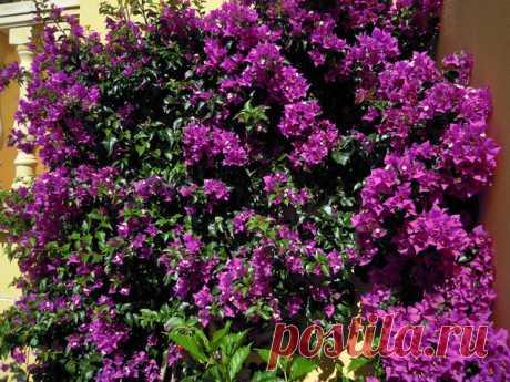 Красивые быстрорастущие вьющиеся растения для сада | САД | Яндекс Дзен