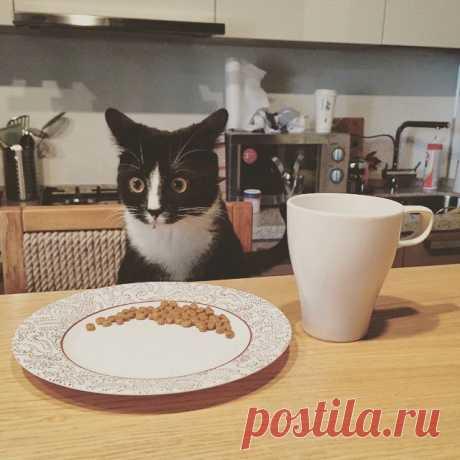 Мой друг должен был заботиться об этой кошке, пока владелец был за городом. Вот как он посмотрел на свой первый завтрак