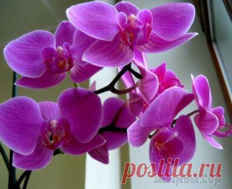 Наиболее распространенные болезни орхидей и их лечение