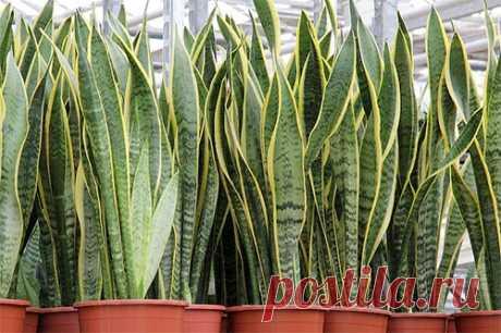 Теневыносливые комнатные растения | WikiBotanika.ru
