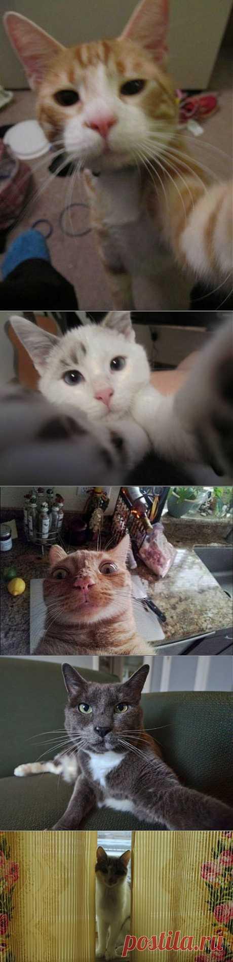 Кошачьи самострелы | Четвероногий юмор