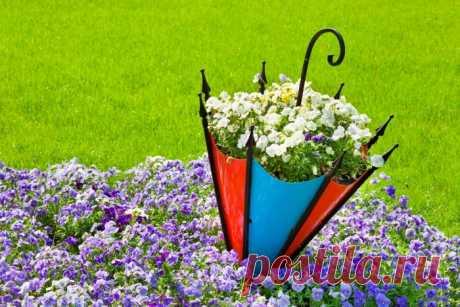 Обои на рабочий стол Цветы:Nature, Flowers, Flower, Umbrella, SUMMER. - скачать бесплатно.   Обои-на-стол.com