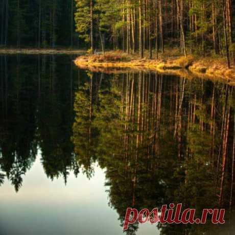 Запах всей живой природы, Как волшебный эликсир, Нас здоровьем наполняет, Добавляя свежих сил...  Леонид Зеленский
