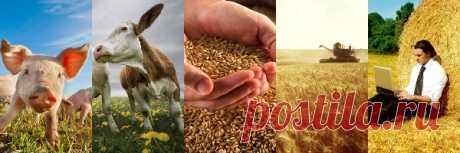 США в шоке: из-за антироссийских санкций в России вырос аграрный сектор