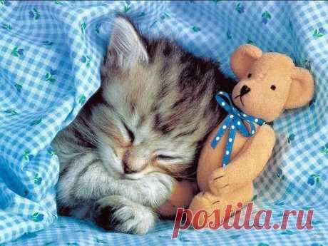 Спим сладко без лекарств: домашнее снотворное
