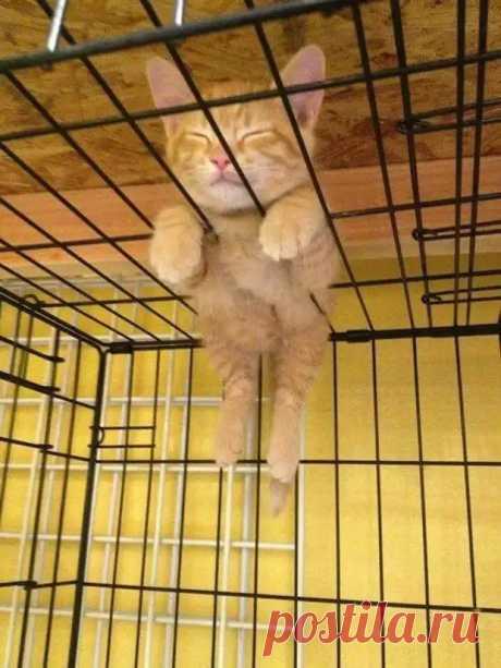 25 странных мест, ставших кошачьей спальней - Сделай сам - медиаплатформа МирТесен