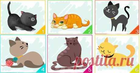 Тест: Кошка, которую вы выберите, расскажет многое о вашей личности - Кошка № 1