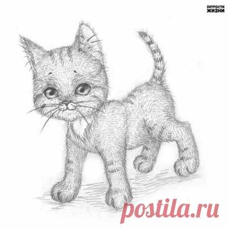 Рисуем котёнка