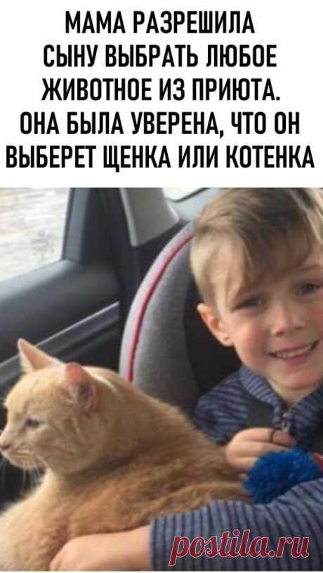 Мама разрешила сыну выбрать любое животное из приюта. Она была уверена, что он выберет щенка или котенка