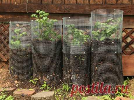 Урожайность records с башней картофель ! | Блог Сад Alsagarden - журнал для садоводов любопытная
