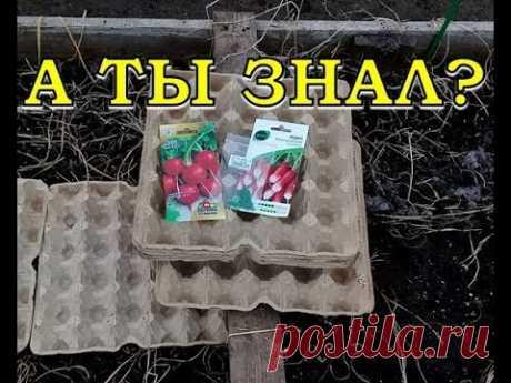 СУПЕР-СПОСОБ выращивания РЕДИСА в лотках из-под яиц!