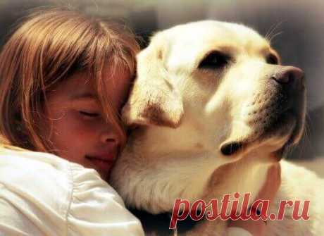 Какие собаки лечат людей?