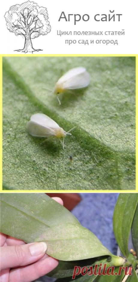 Вредители и паразиты - почему желтеют и вянут листья орхидей