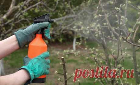 Железный купорос – что это и для чего применяется в саду? | Дела огородные (Огород.ru)