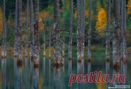 Озеро Каинды, Казахстан. Автор фото: Александр Кузнецов.