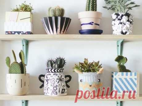 8 растений, которые принесут в ваш дом позитив Главное – держать их подальше от холодного окна