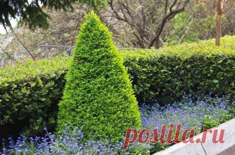 Стрижка деревьев и кустарников: какие растения лучше всего ее переносят