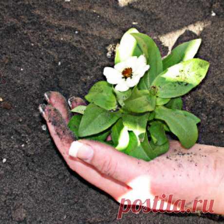 Высокая кислотность почвы: ее вред и причины - Огород без забот