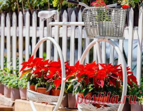 Цветочный гороскоп: какие растения подходят разным знакам Зодиака