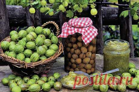 Jam from a gooseberry: Imperial, with orange, a cherry leaf, a walnut  \u000aAnd still the most popular ways of preparation of jam from a gooseberry for the winter\u000a\u000a\u000a\u000aRecipes of jam from a gooseberry - great variety. We collected the most popular of them for you. Photo: GLOBAL LOOK PRESS …