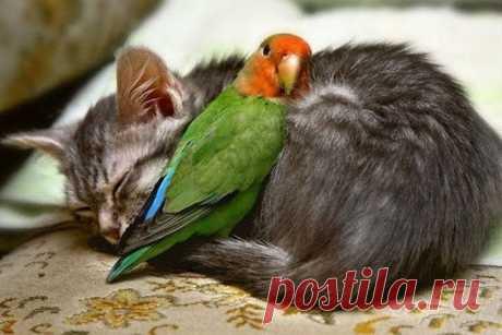 Посмотрите на этих животных и вы поймете, что дружба не имеет границ!