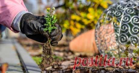 Как избавиться от сорняков на газоне и в цветнике – 5 экосоветов Самое экологичное средство борьбы с сорными растениями среди цветов и газонных трав – это прополка, но не только она! Рассказываем, как окончательно избавиться от докучливых сорняков народными и другими безопасными для окружающей среды методами.
