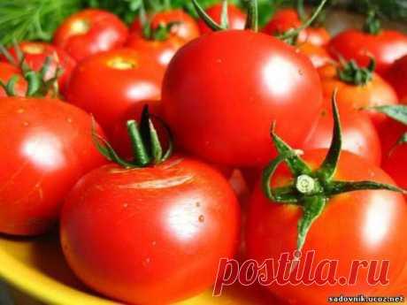 От фитофторы помидор Рецепты - Удобрения Подкормка - Каталог статей - Садовник