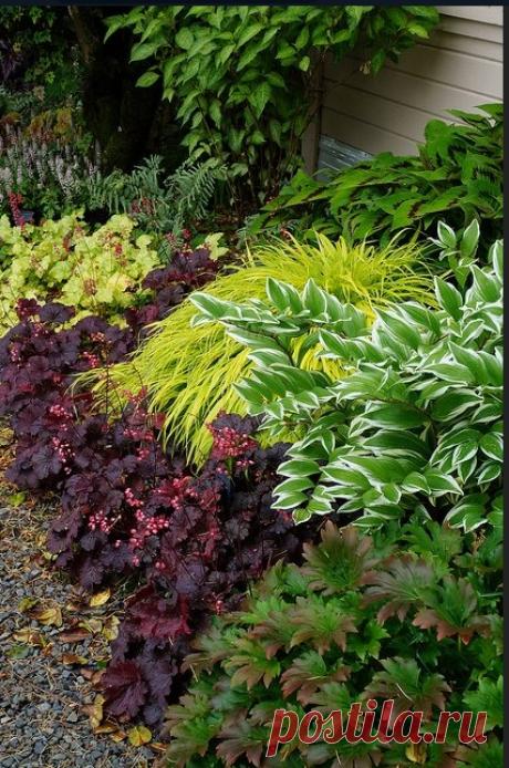 Тенистые сады. В которых притаились.. | Green Mind. Растения & Дизайн. | ВКонтакте