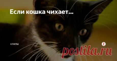 Если кошка чихает... Чаще всего, проветривая комнату, мы не задумываемся о том, что сквозняк вреден не только людям,..